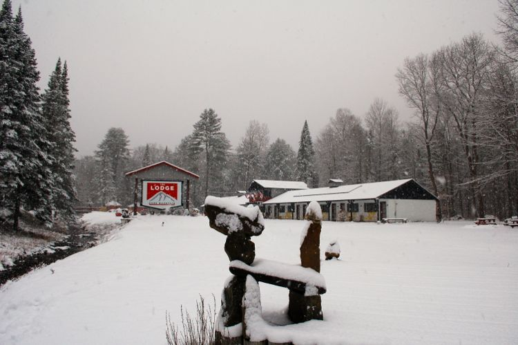 Gore snow dog